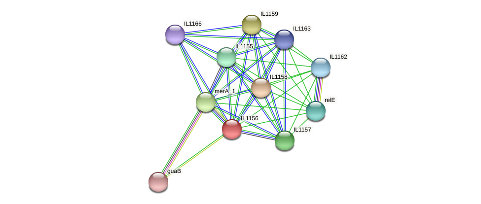 IL1156 protein (Idiomarina loihiensis) - STRING interaction network
