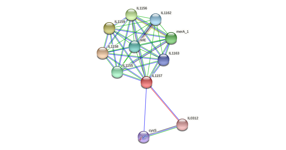 IL1157 protein (Idiomarina loihiensis) - STRING interaction network