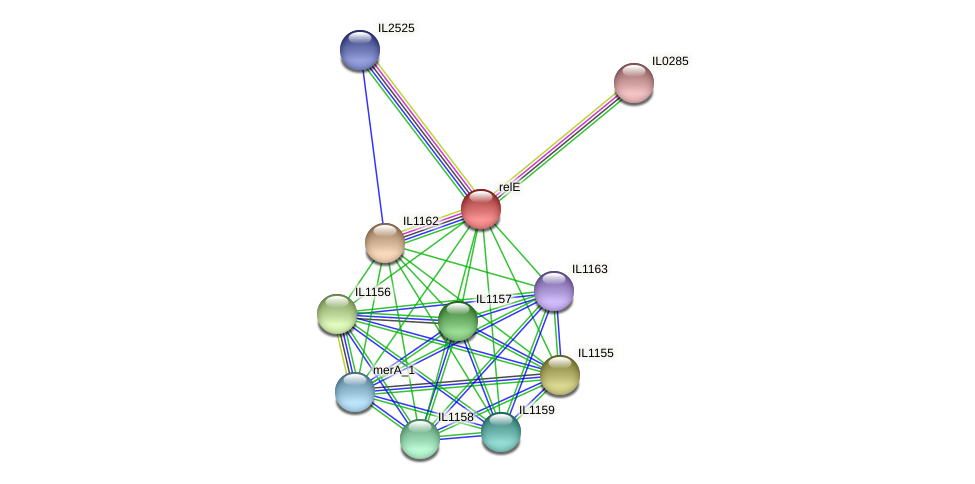 relE protein (Idiomarina loihiensis) - STRING interaction network