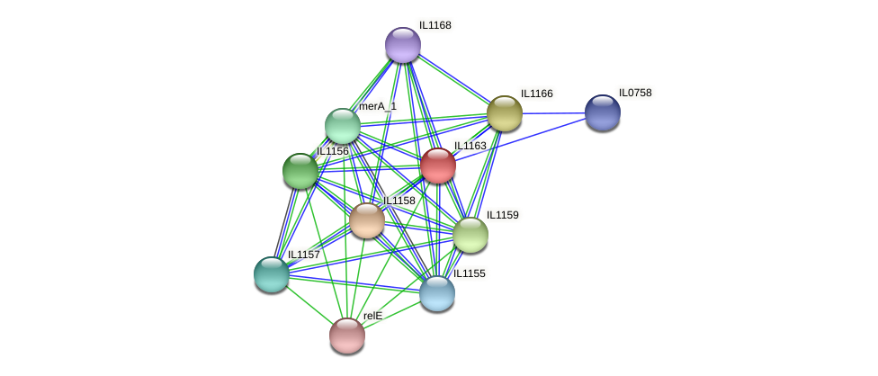 IL1163 protein (Idiomarina loihiensis) - STRING interaction network