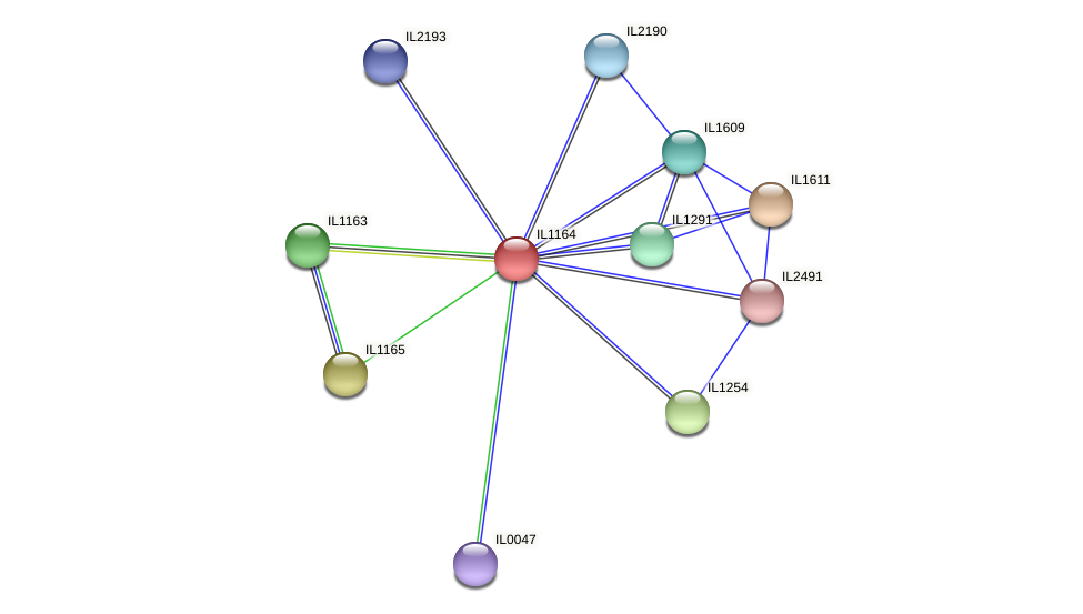 IL1164 protein (Idiomarina loihiensis) - STRING interaction network