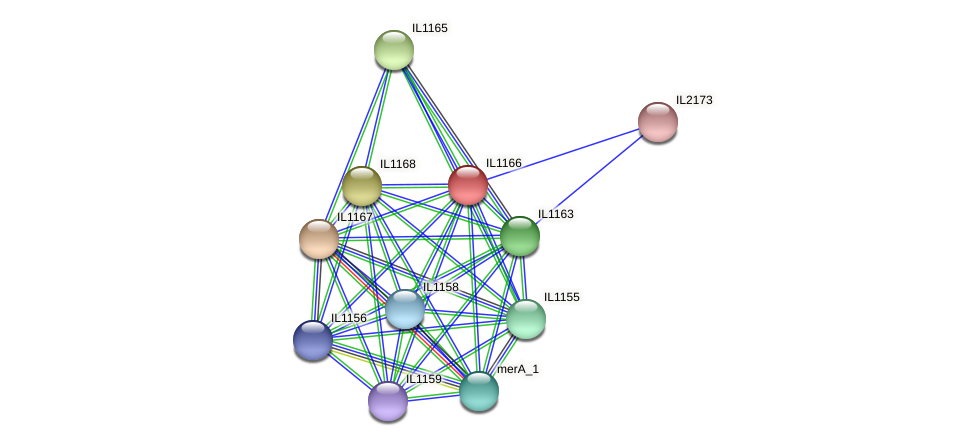 IL1166 protein (Idiomarina loihiensis) - STRING interaction network