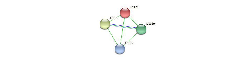 IL1171 protein (Idiomarina loihiensis) - STRING interaction network