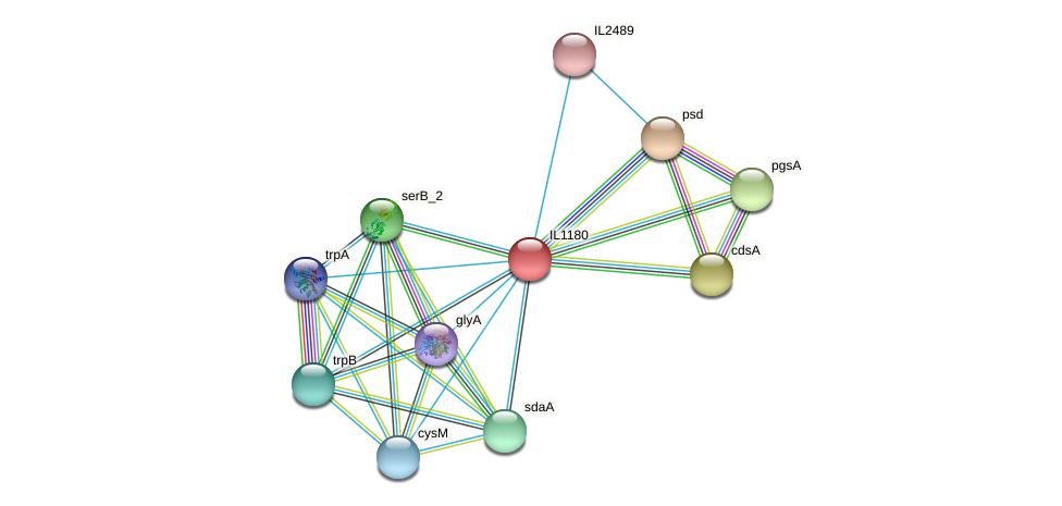 IL1180 protein (Idiomarina loihiensis) - STRING interaction network