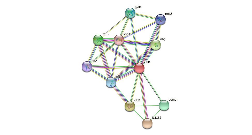 sfhB protein (Idiomarina loihiensis) - STRING interaction network