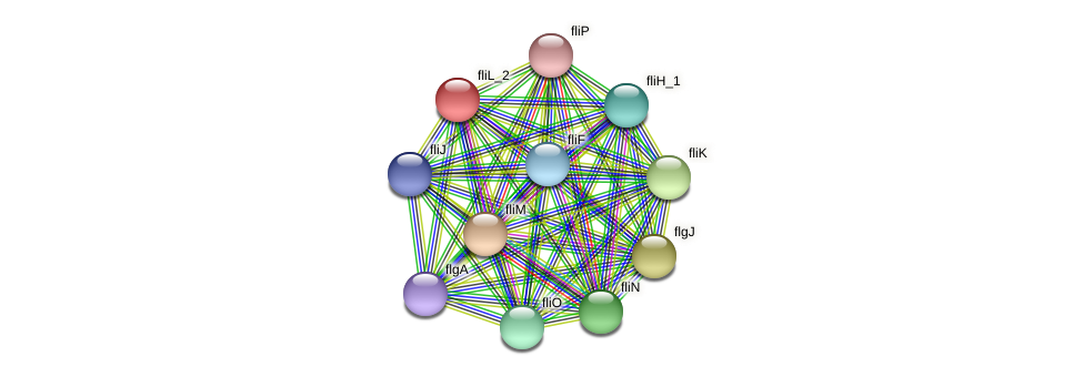 IL1194 protein (Idiomarina loihiensis) - STRING interaction network