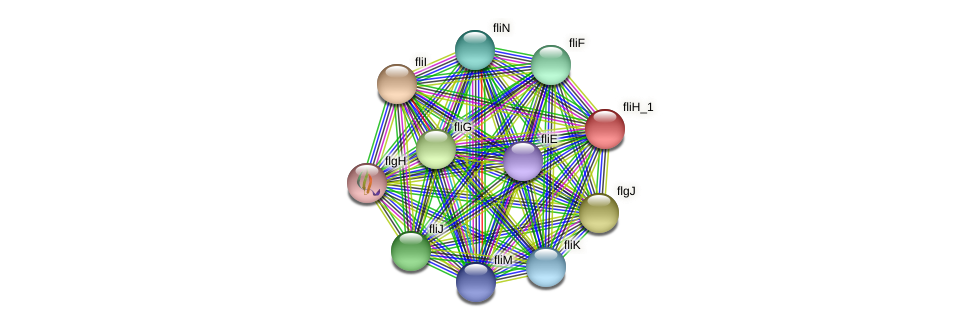 IL1198 protein (Idiomarina loihiensis) - STRING interaction network