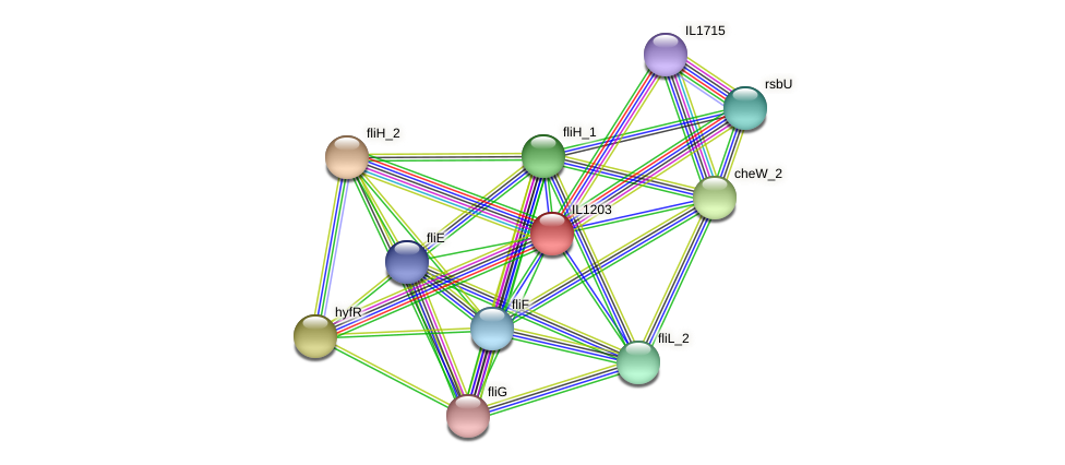 IL1203 protein (Idiomarina loihiensis) - STRING interaction network