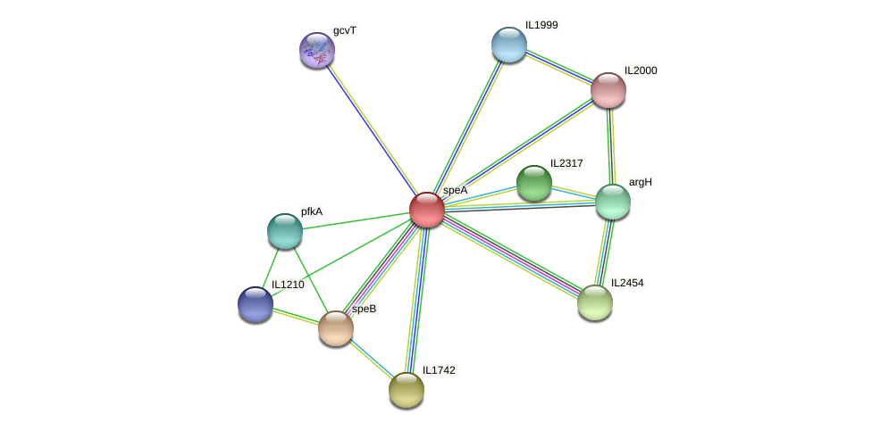 speA protein (Idiomarina loihiensis) - STRING interaction network