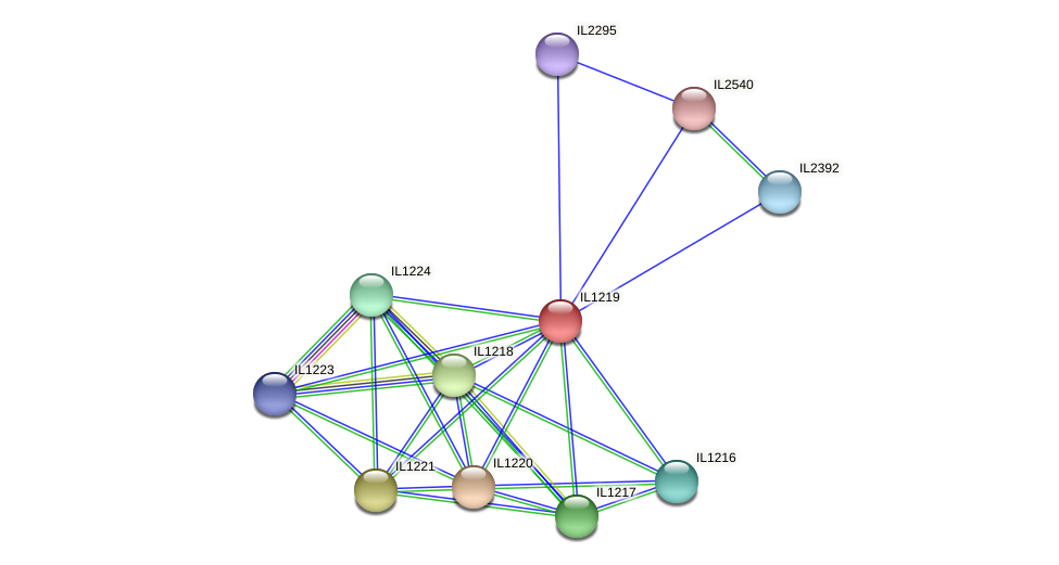 IL1219 protein (Idiomarina loihiensis) - STRING interaction network