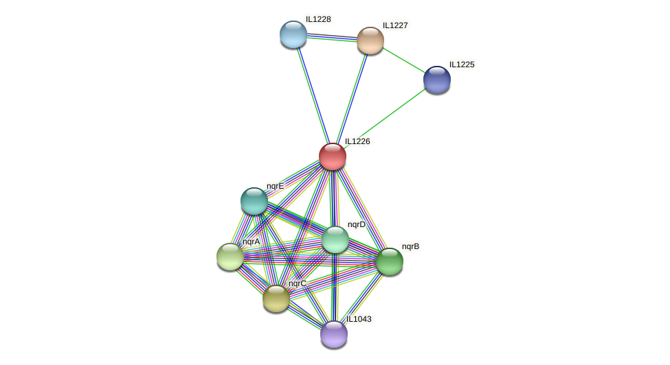 IL1226 protein (Idiomarina loihiensis) - STRING interaction network