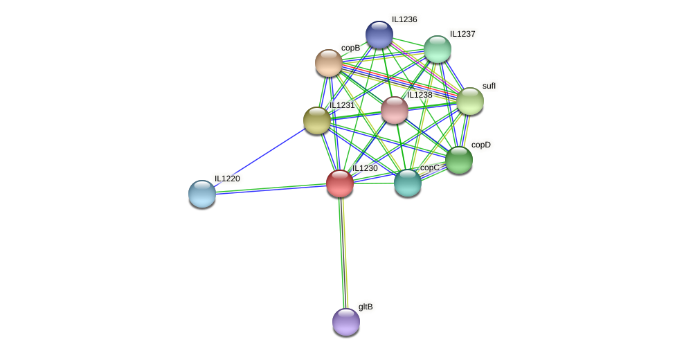 IL1230 protein (Idiomarina loihiensis) - STRING interaction network