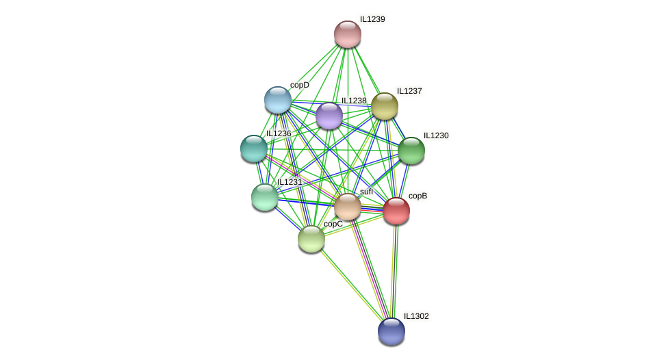 copB protein (Idiomarina loihiensis) - STRING interaction network