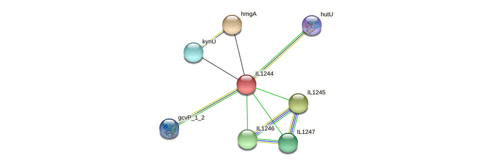 IL1244 protein (Idiomarina loihiensis) - STRING interaction network