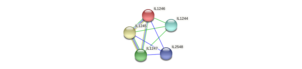 IL1246 protein (Idiomarina loihiensis) - STRING interaction network