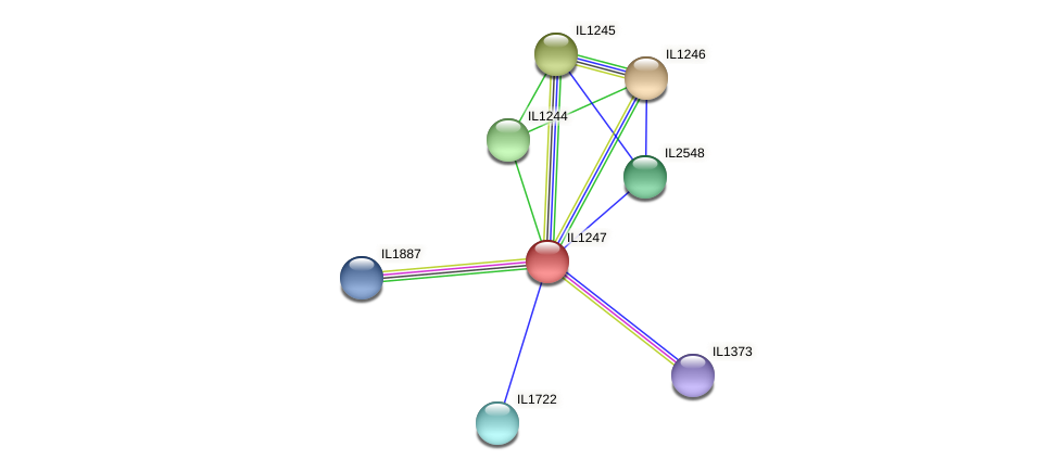 IL1247 protein (Idiomarina loihiensis) - STRING interaction network