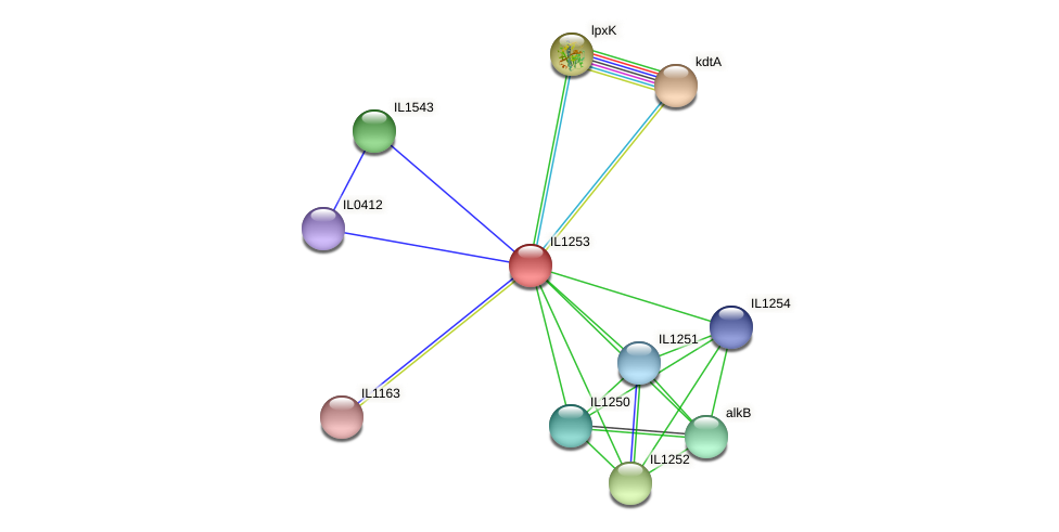 IL1253 protein (Idiomarina loihiensis) - STRING interaction network