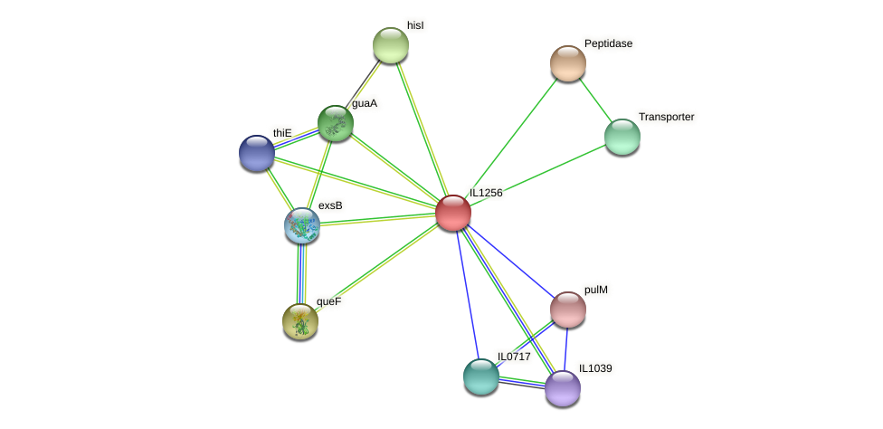 IL1256 protein (Idiomarina loihiensis) - STRING interaction network