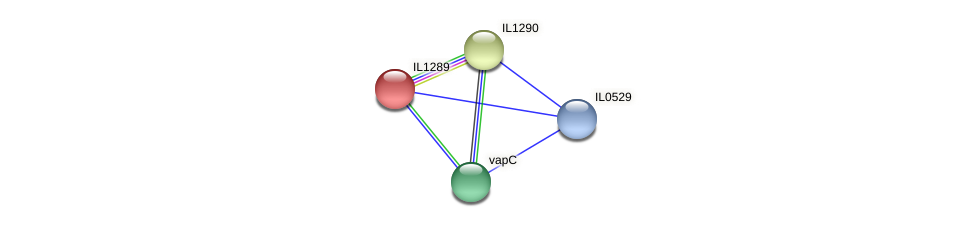 IL1289 protein (Idiomarina loihiensis) - STRING interaction network