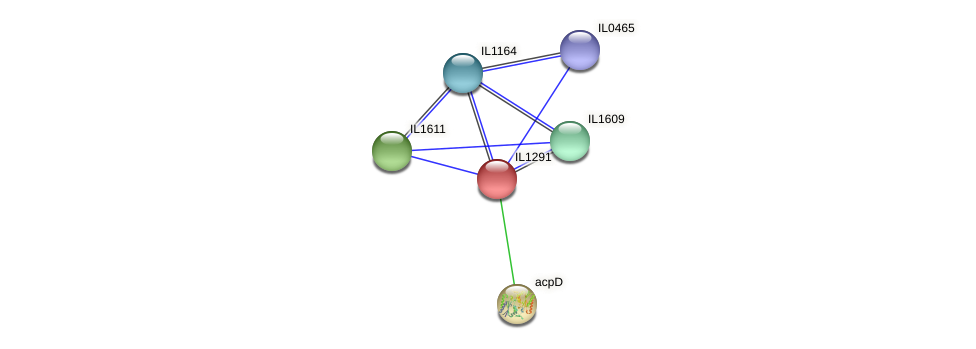IL1291 protein (Idiomarina loihiensis) - STRING interaction network
