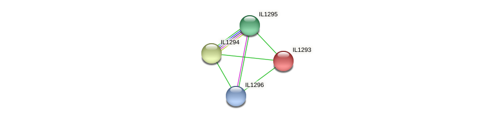 IL1293 protein (Idiomarina loihiensis) - STRING interaction network