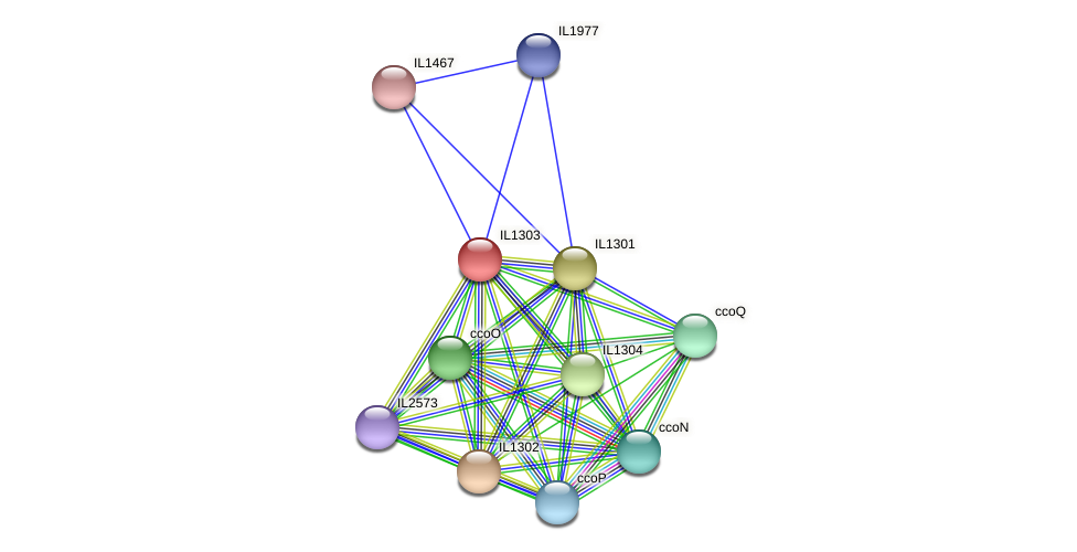 IL1303 protein (Idiomarina loihiensis) - STRING interaction network