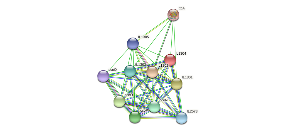 IL1304 protein (Idiomarina loihiensis) - STRING interaction network