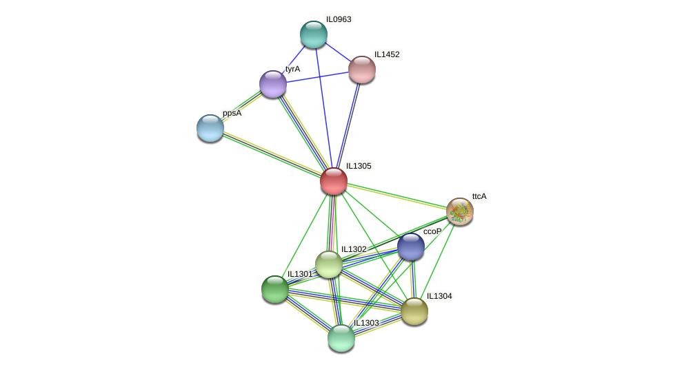 IL1305 protein (Idiomarina loihiensis) - STRING interaction network