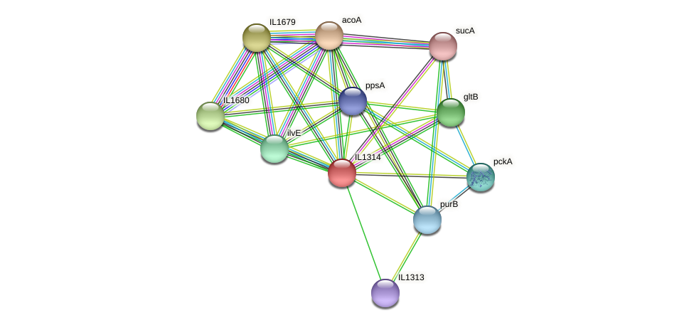 IL1314 protein (Idiomarina loihiensis) - STRING interaction network