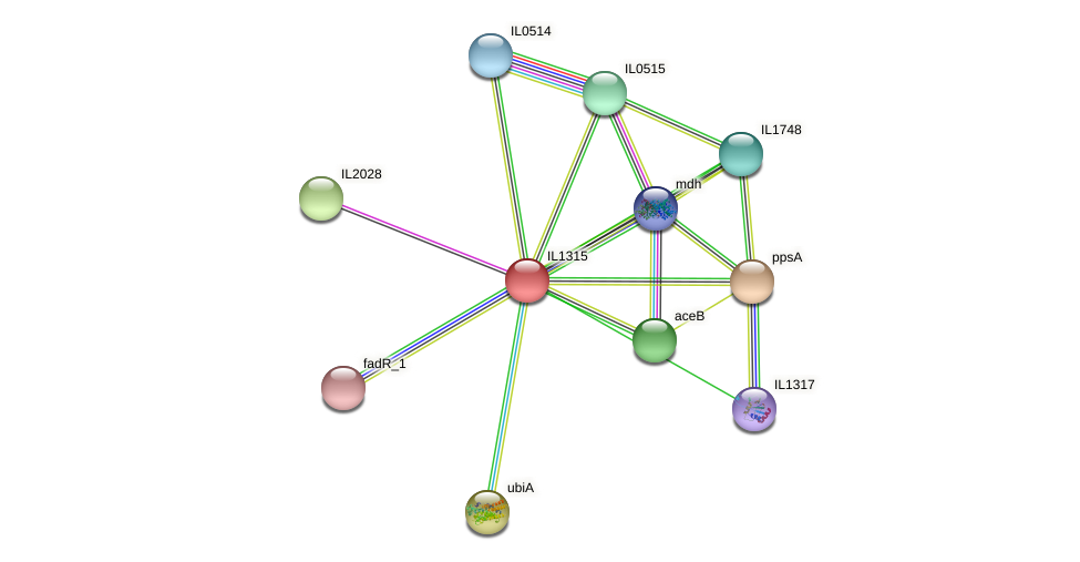 IL1315 protein (Idiomarina loihiensis) - STRING interaction network