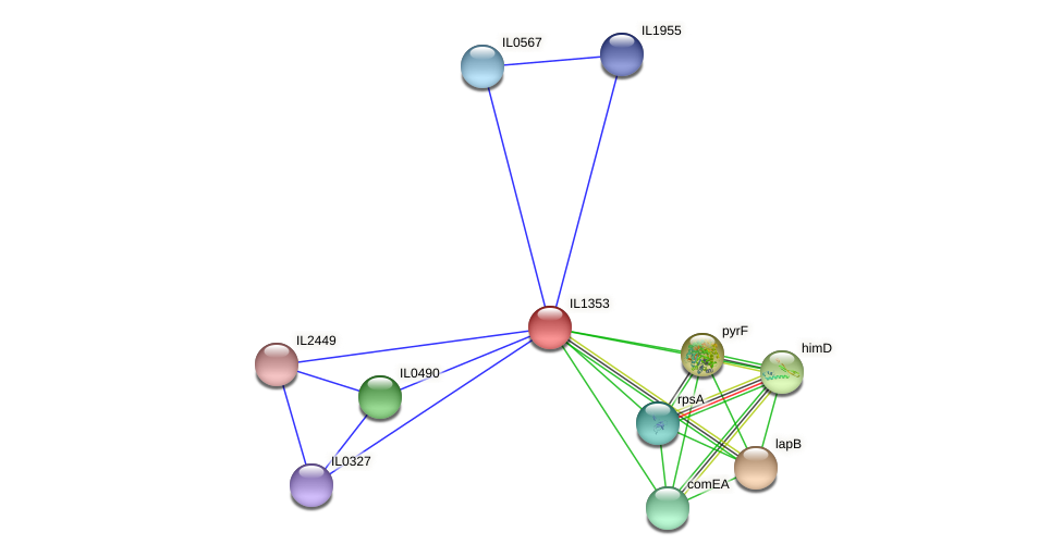 IL1353 protein (Idiomarina loihiensis) - STRING interaction network