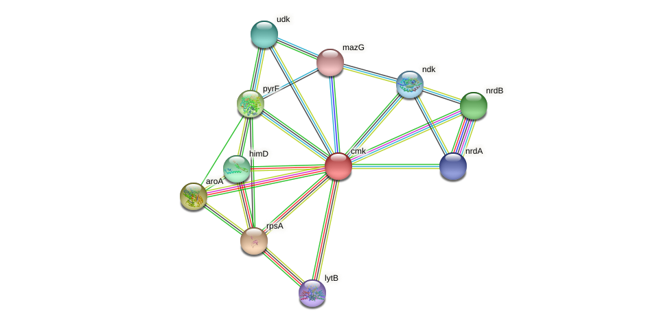 cmk protein (Idiomarina loihiensis) - STRING interaction network