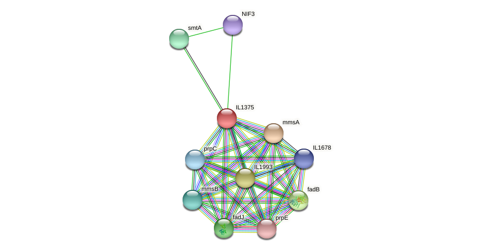 IL1375 protein (Idiomarina loihiensis) - STRING interaction network