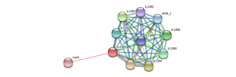 IL1385 protein (Idiomarina loihiensis) - STRING interaction network