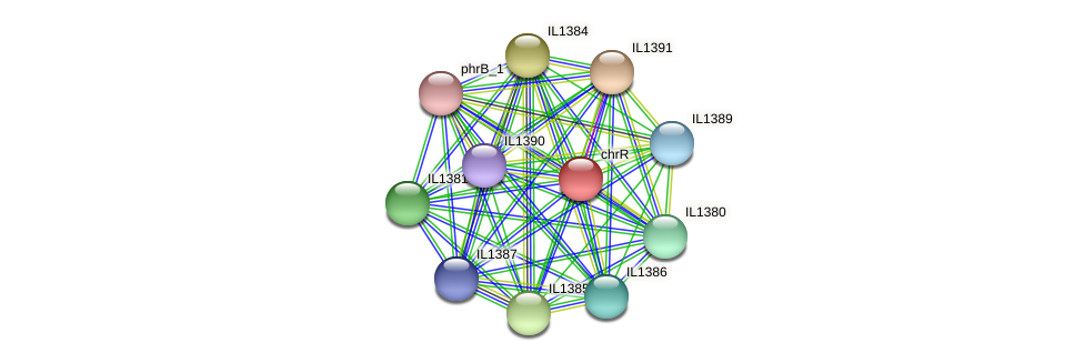 chrR protein (Idiomarina loihiensis) - STRING interaction network
