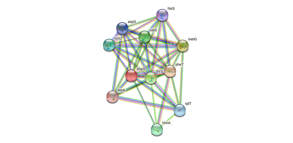 pheS protein (Idiomarina loihiensis) - STRING interaction network
