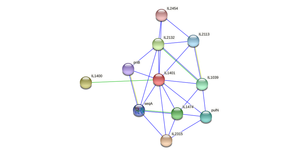 IL1401 protein (Idiomarina loihiensis) - STRING interaction network