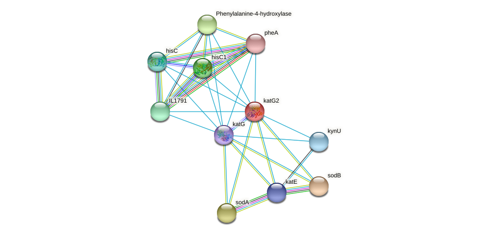 katG2 protein (Idiomarina loihiensis) - STRING interaction network