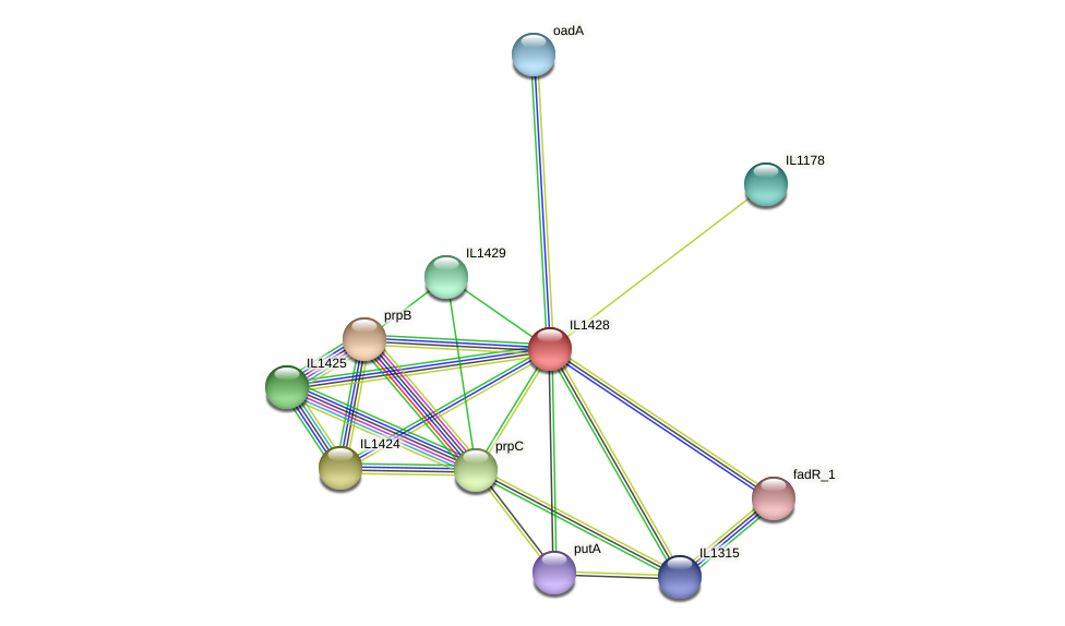 IL1428 protein (Idiomarina loihiensis) - STRING interaction network