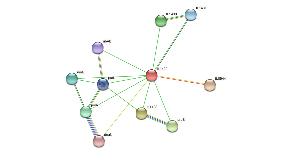 IL1429 protein (Idiomarina loihiensis) - STRING interaction network