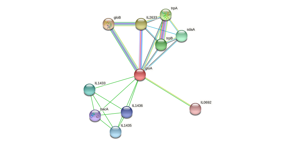 gloA protein (Idiomarina loihiensis) - STRING interaction network