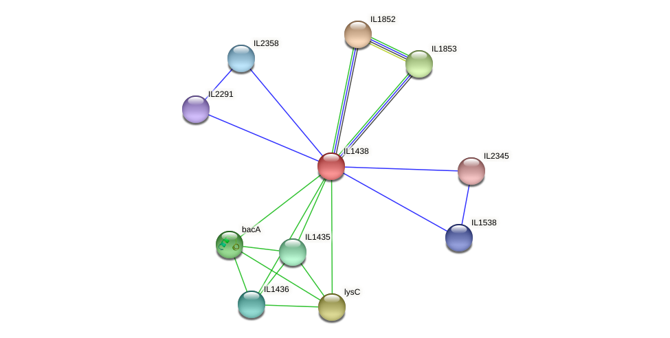 IL1438 protein (Idiomarina loihiensis) - STRING interaction network