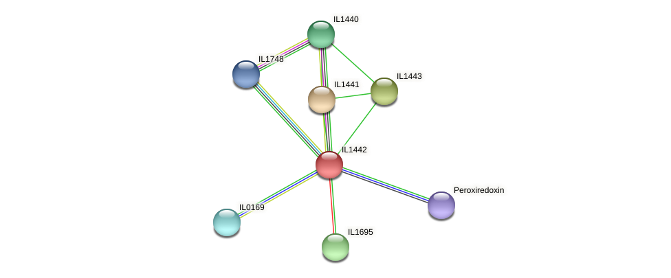 IL1442 protein (Idiomarina loihiensis) - STRING interaction network