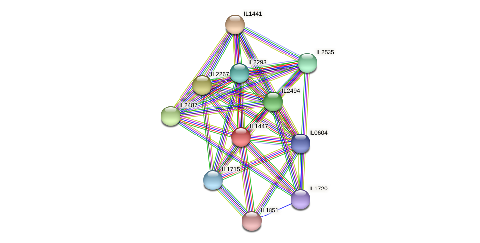 IL1447 protein (Idiomarina loihiensis) - STRING interaction network