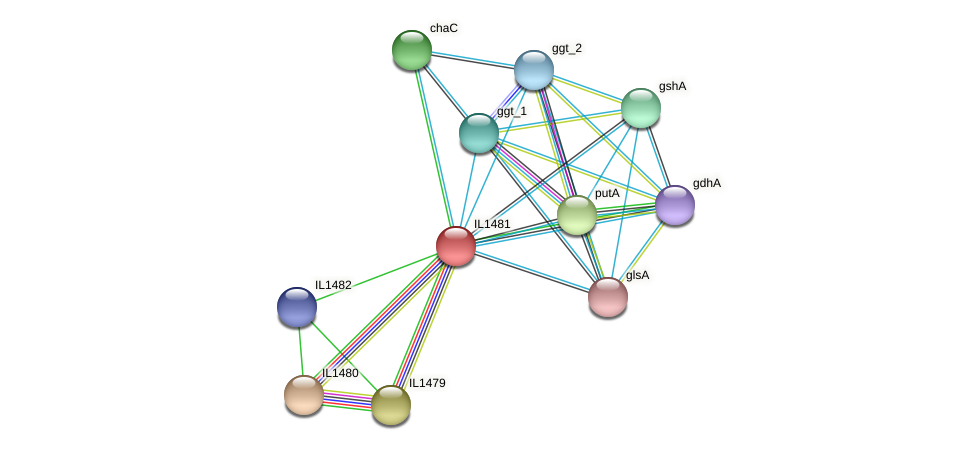 IL1481 protein (Idiomarina loihiensis) - STRING interaction network