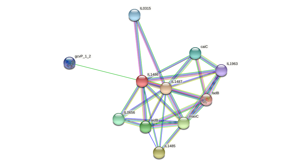 IL1486 protein (Idiomarina loihiensis) - STRING interaction network