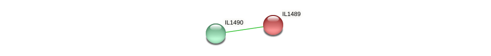 IL1489 protein (Idiomarina loihiensis) - STRING interaction network