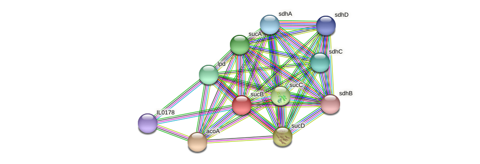sucB protein (Idiomarina loihiensis) - STRING interaction network