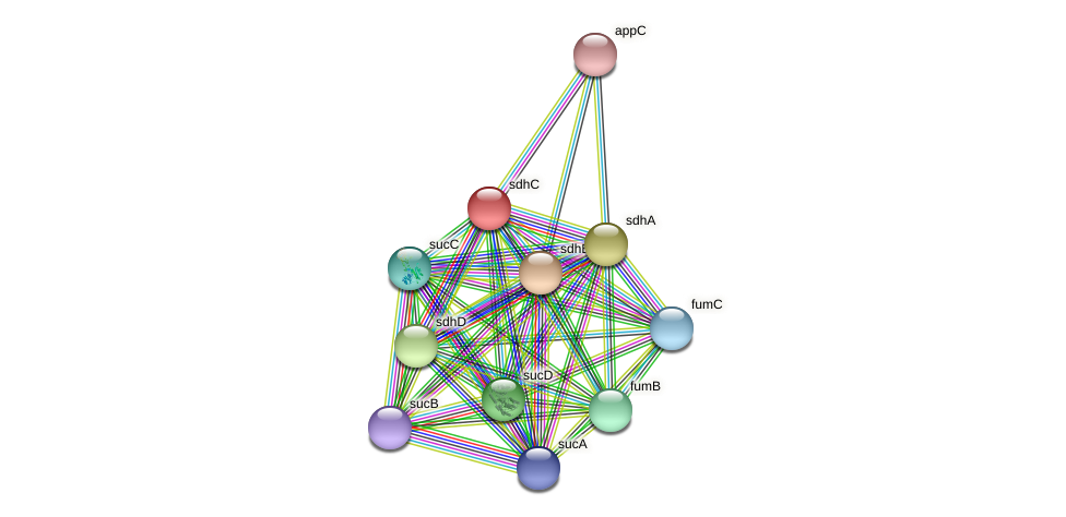 sdhC protein (Idiomarina loihiensis) - STRING interaction network