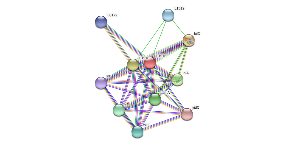 IL1516 protein (Idiomarina loihiensis) - STRING interaction network